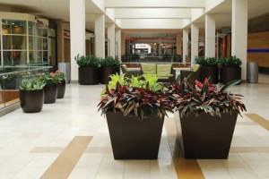 mall plants