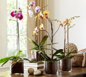 orchids inside