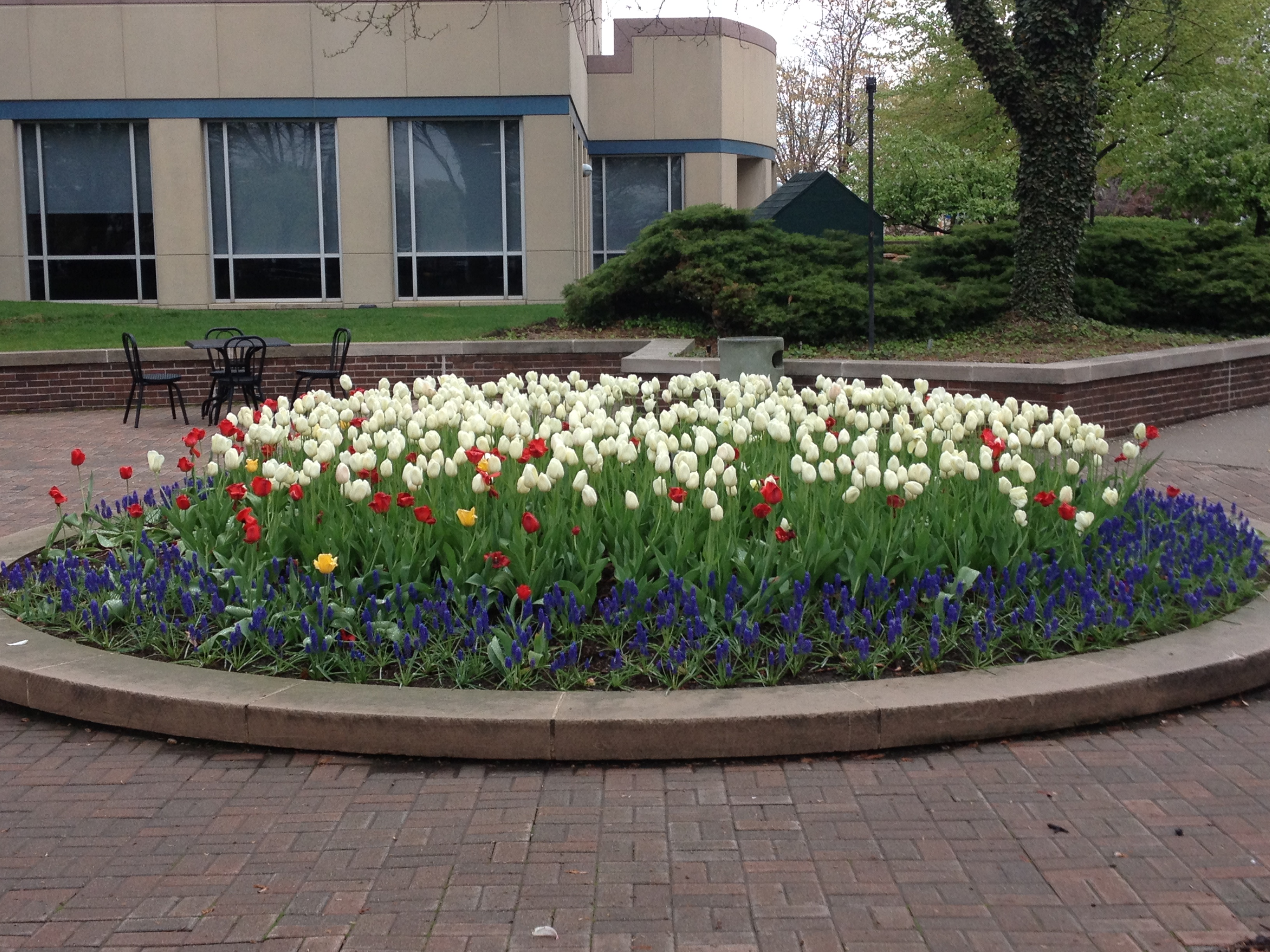 Plant spring flowers now buck and sons landscape services 023 mightylinksfo Image collections