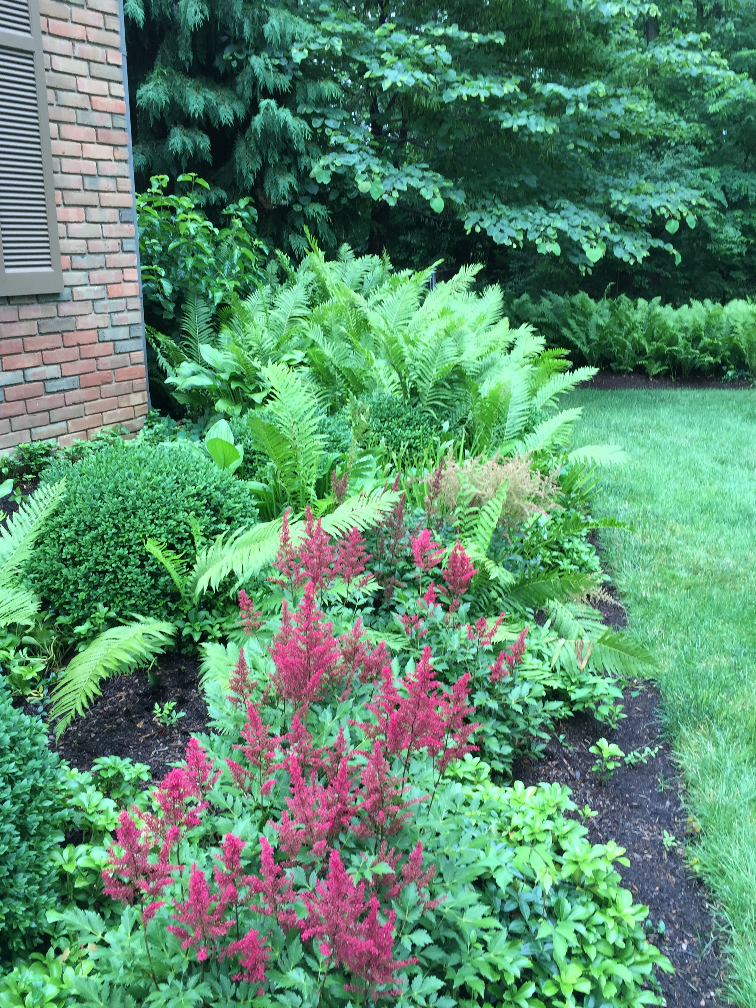 Should I Prune My Plants Buck And Sons Landscape Services